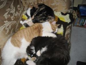 My Calico, Black cat and Tabby all together-for once!