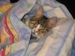 Ivan snuggled in blanket, March 2012