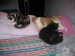 3 kitties on bed