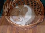 bit in a basket