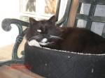 Sylvester in bed mar 07