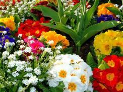 colorful flower garden#1