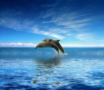 Dolphins-Jumping-out of Ocean