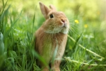 Cute rabbit in green grass. Close-up, shallow DOF.