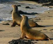 sea lions on shore