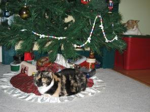 Tootsie under xmas tree_12-14-2008